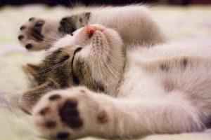 Najzdrowsza karma dla kota - poradnik 7